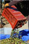 Stackable lattice crate 34 litres