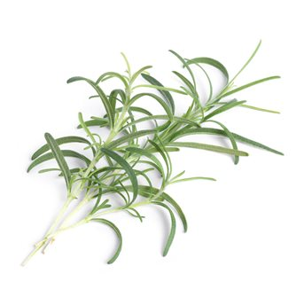 Rosemary refill ingot for vegetable garden