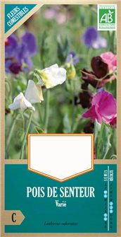Organic varied mammoth sweet pea seeds