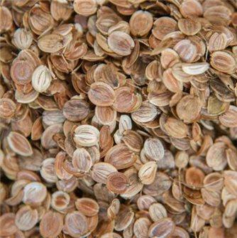 Guernsey Parsnip Seeds